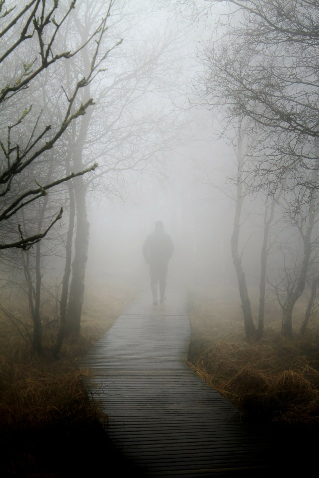 Mysterious man walking along boardwalk in the mist and fog between trees