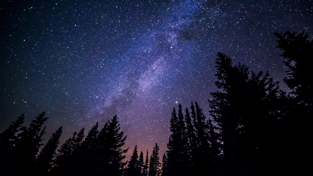 Night Sky full of bright stars of the milky way and dark trees