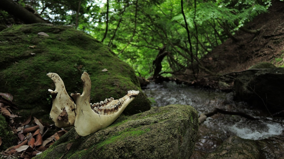 Skull and bones on a mountain next to a stream