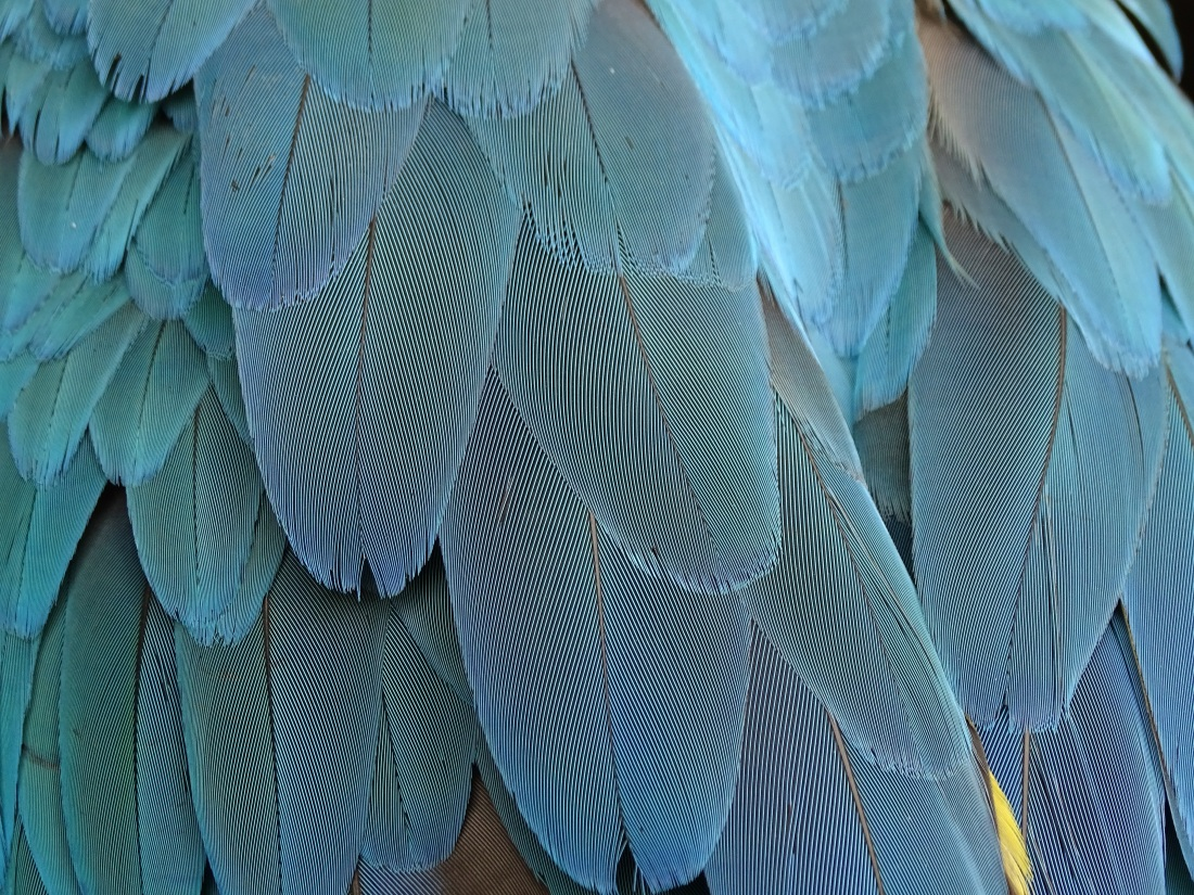blue feathers in a bird's plumage